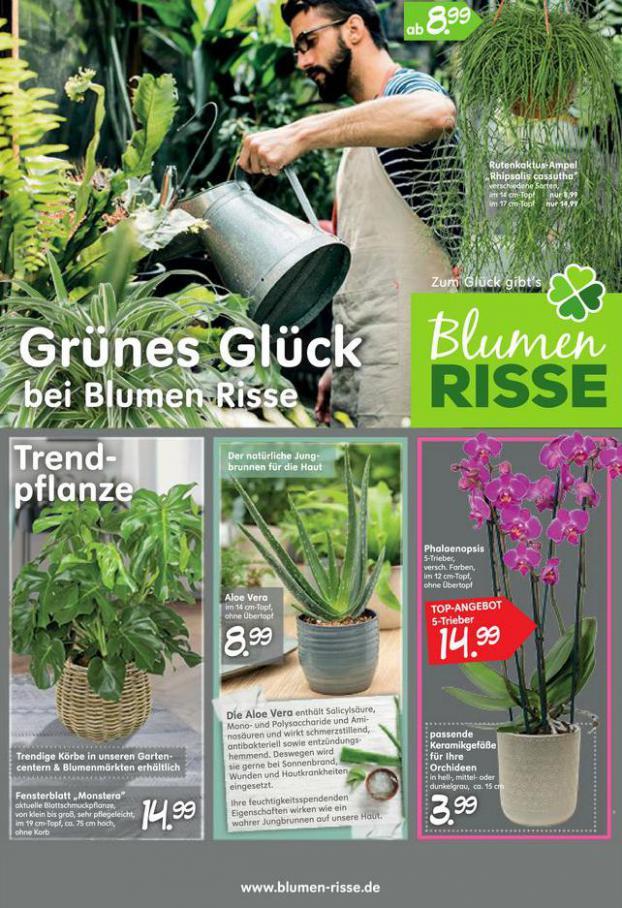 Grünes Glück . Blumen Risse (2020-02-12-2020-02-12)